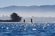 Sports Art Art - Faraway Paddle Boarders in Morro Bay by Bill Brennan - Printscapes