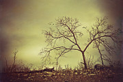 Lonely Tree Prints - Farewell Print by Iris Greenwell