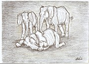 Elephants Drawings - Farewell old friend by Desley Brkic