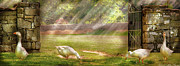 Mother Goose Art - Farm - Geese -  Birds of a Feather - Panorama by Mike Savad
