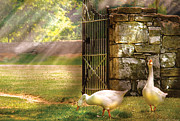 Mother Goose Metal Prints - Farm - Geese -  Birds of a Feather Metal Print by Mike Savad