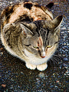 Tabby Art - Farm Cat by Colleen Kammerer