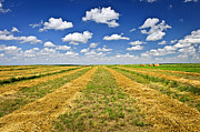 Horizon Metal Prints - Farm field at harvest in Saskatchewan Metal Print by Elena Elisseeva