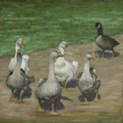 Ducks Paintings - Farm Geese by John  Reynolds