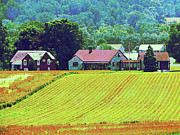 Farmhouses Art - Farm Homestead by Susan Savad