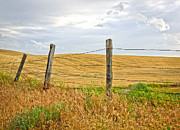 Horse And Buggy Prints - Farm Land Fence Line Print by Steve McKinzie