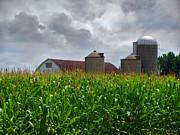 Farm Landscape Print by Ms Judi
