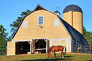 Barn Photos - Farm by Mitch Cat