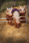 Pigs Framed Prints - Farm - Pig - Getting past hurdles Framed Print by Mike Savad