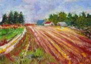 Miniature Pastels - Farm Rows by David Patterson
