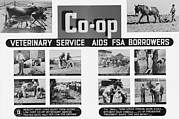 Veterinary Prints - Farm Security Administration Poster Print by Everett