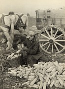 Supports Framed Prints - Farmer Collecting Husked Corn To Load Framed Print by Everett
