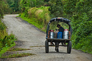Campesino Framed Prints - farmer transporting their milk cans. Department of Narino. Republic of Colombia. Framed Print by Eric Bauer