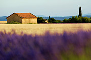 Farming Digital Art - Farmhouse in a harvested wheat field surrounded by lavender fields by Sami Sarkis