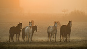 Dawn Photos - Farming Dawn by Insight Imaging
