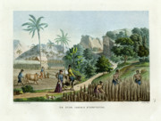 Bucolic Drawings - Farming on Guam Island by d apres Pellion