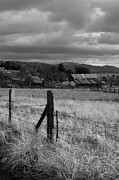Fence Post Prints - Farmland Fence post - Black and White Print by Peter Tellone