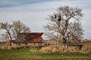 Old Barns Acrylic Prints - Farmstead 2 Acrylic Print by Lana Trussell