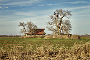 Old Barns Prints - Farmstead Print by Lana Trussell