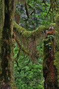 Enchanting Photos - Fascinating Hoh Valley - Hoh Rain Forest Olympic National Park ONP WA USA by Christine Till