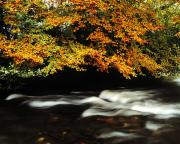 Fall River Scenes Prints - Fast Flowing Water And Fall Colours Print by The Irish Image Collection