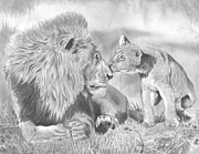 Animals Drawings Posters - Father and Cub Poster by Christian Conner