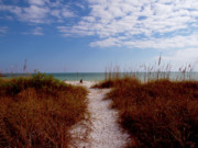 Path To The Beach Photo Prints - Favorite Beach Print by Carol McCutcheon
