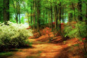 Woods Digital Art Posters - Favorite Path Poster by Lois Bryan
