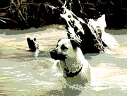 Puppies Digital Art - Favorite Swimming Hole by Dorrie Pelzer