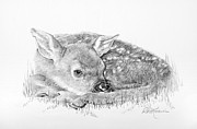 Graphite Portraits Prints - Fawn in the Grass Print by Roy Kaelin