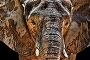 Elephant Photo Posters - Fearless Poster by Janet Fikar