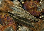 Pheasant Originals - Featherdance by Christian Slanec