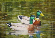 Ducks Paintings - Feathered Friends by Shirley Braithwaite Hunt