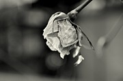 Winter Flower Photos - February 15th by Dean Harte