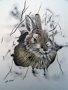Wildlife Drawings Drawings Prints - February Print by Stan White