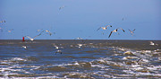 Flying Seagulls Framed Prints - Feed us - Ferry to Galveston TX Framed Print by Susanne Van Hulst