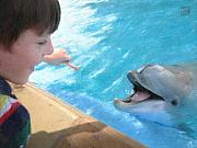 Dolphin Digital Art - Feeding a Friend by Geoffrey C Lewis