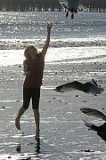 Robert Bissett - Feeding Seagulls
