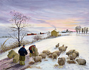 Snow Farm Prints - Feeding sheep in winter Print by Margaret Loxton