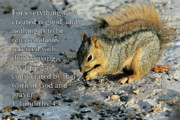 Patio Framed Prints - Feeding Squirrel 1Timothy 4 v 4 Framed Print by Linda Phelps