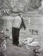 Swans... Drawings - Feeding the Birds by Kim Hunter