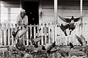 Village Life Prints - Feeding the Pigeons-St Lucia Print by Chester Williams