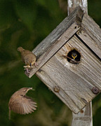 Baby Bird Photos - Feeding Time by Don Wolf