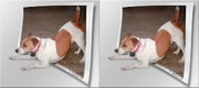 Frisky Photo Posters - Feeling Frisky - Cross your eyes and focus on the middle image Poster by Brian Wallace