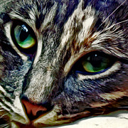 Feline Digital Art - Feline Face by David G Paul