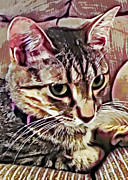 Kitten Prints Digital Art Posters - Feline Fancy Poster by David G Paul