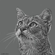 Feline Digital Art - Feline Focus by Larry Linton