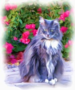 Bougainvilleas Prints - Feline Serenity Print by Carolyn Krek