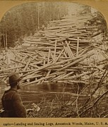 Lumber Industry Framed Prints - Felled Logs Ready To Enter Framed Print by Everett
