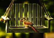 Female Northern Cardinal Framed Prints - Female Cardinal in Evening Light Framed Print by Bill Tiepelman